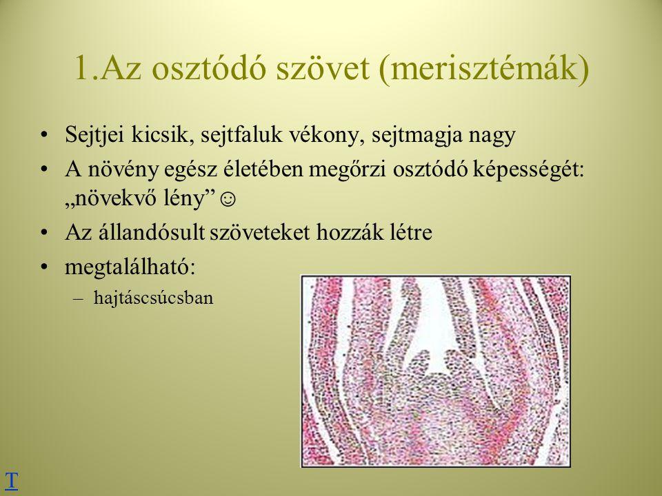 1.Az osztódó szövet (merisztémák)