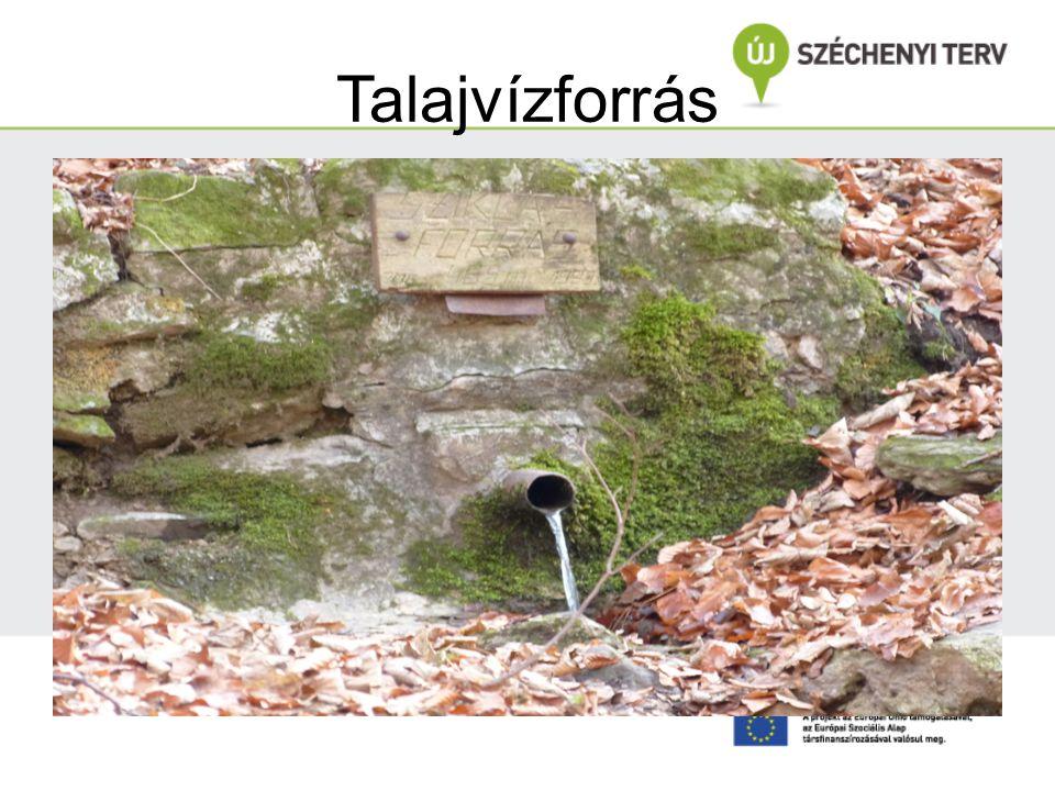 Talajvízforrás Erdészné Csáki Júlia felvétele