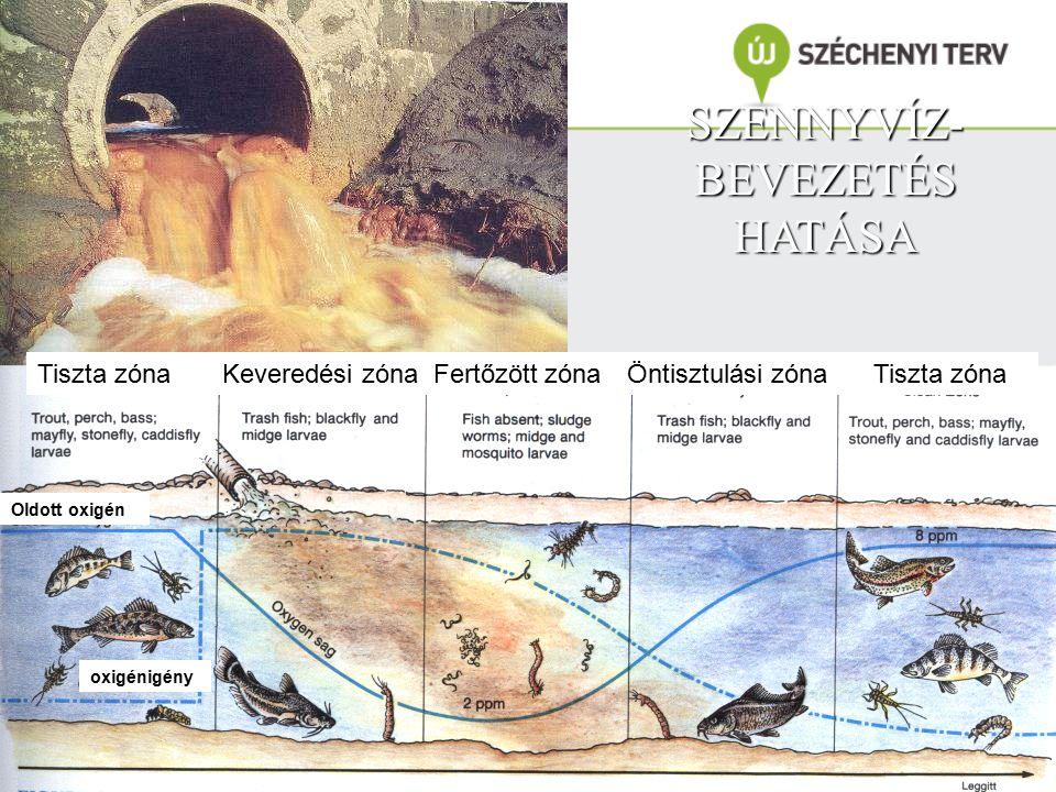 SZENNYVÍZ- BEVEZETÉS HATÁSA Tiszta zóna Keveredési zóna Fertőzött zóna