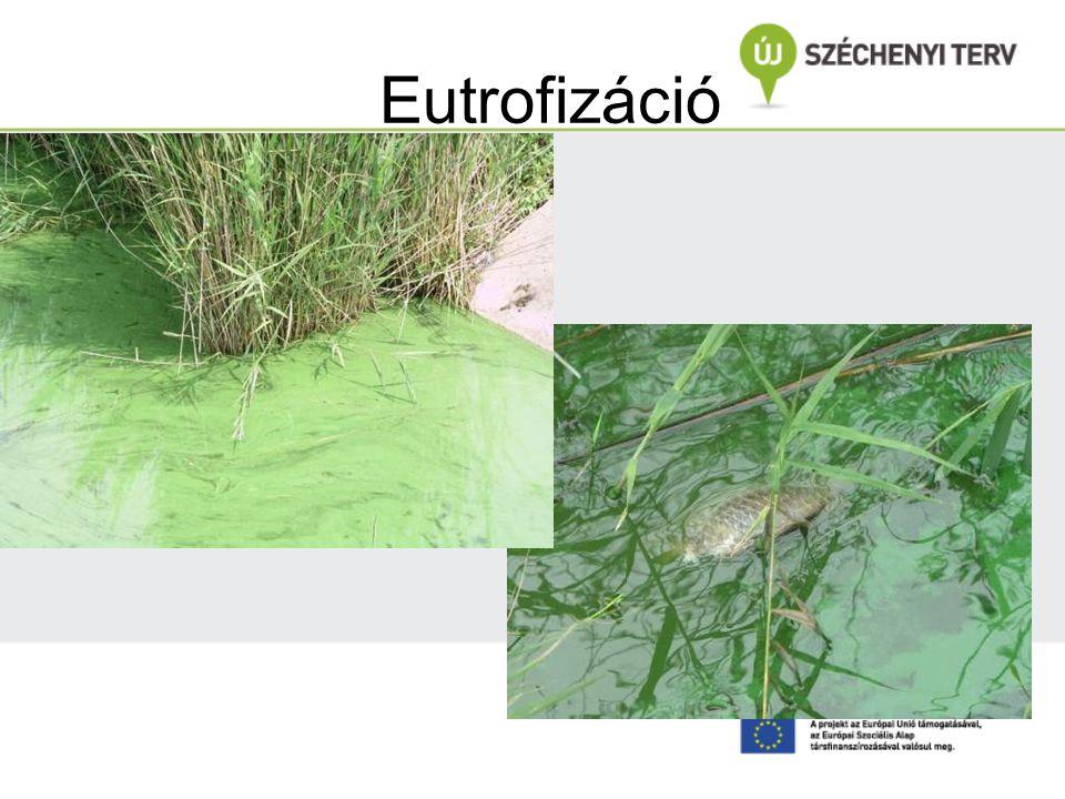 Eutrofizáció Fotó: Szilágyi Ferenc In: Dr. Clement, Kozma: Vízminőség szabályozás BMEEOVV:AI11