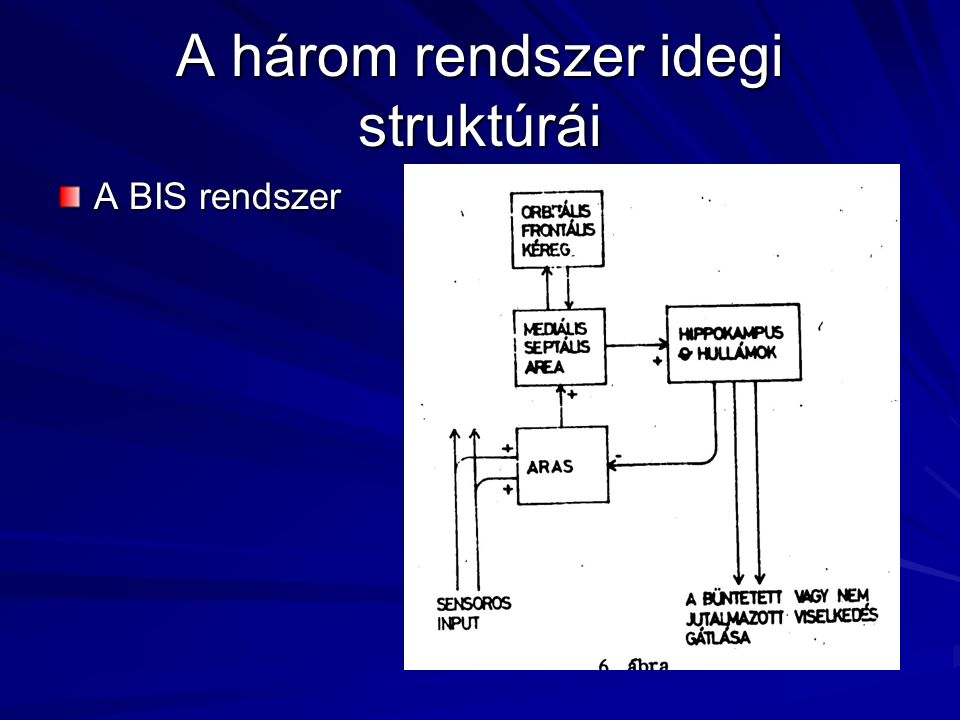 A három rendszer idegi struktúrái
