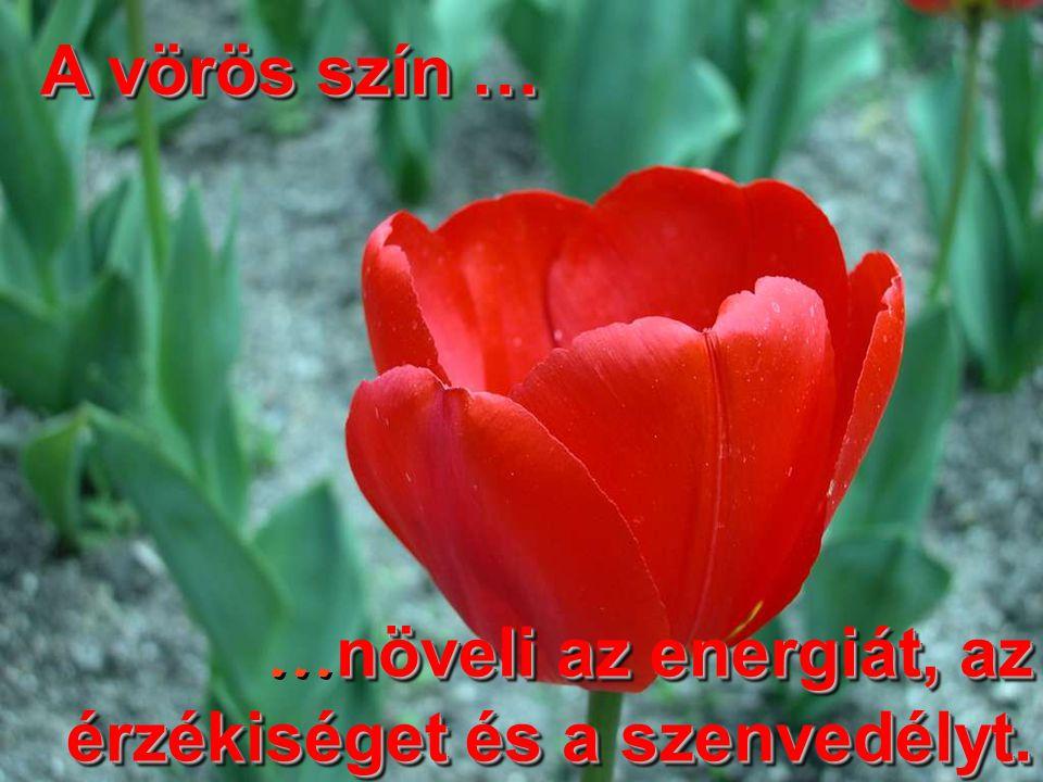 A vörös szín … …növeli az energiát, az érzékiséget és a szenvedélyt.