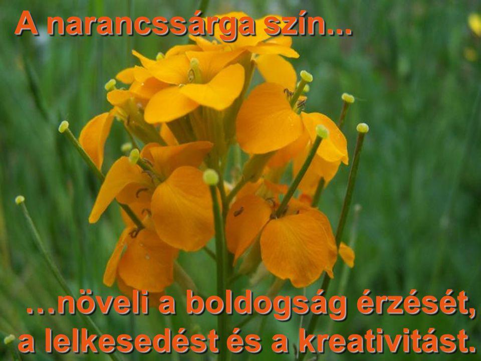A narancssárga szín... …növeli a boldogság érzését, a lelkesedést és a kreativitást.