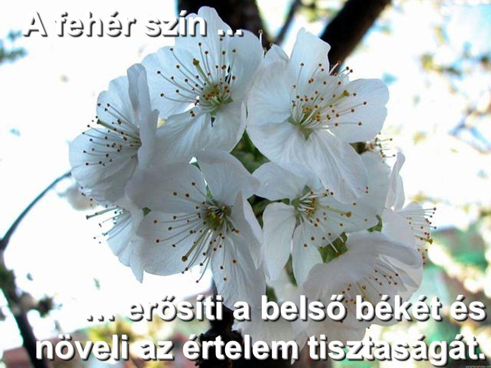 A fehér szín ... … erősíti a belső békét és növeli az értelem tisztaságát.