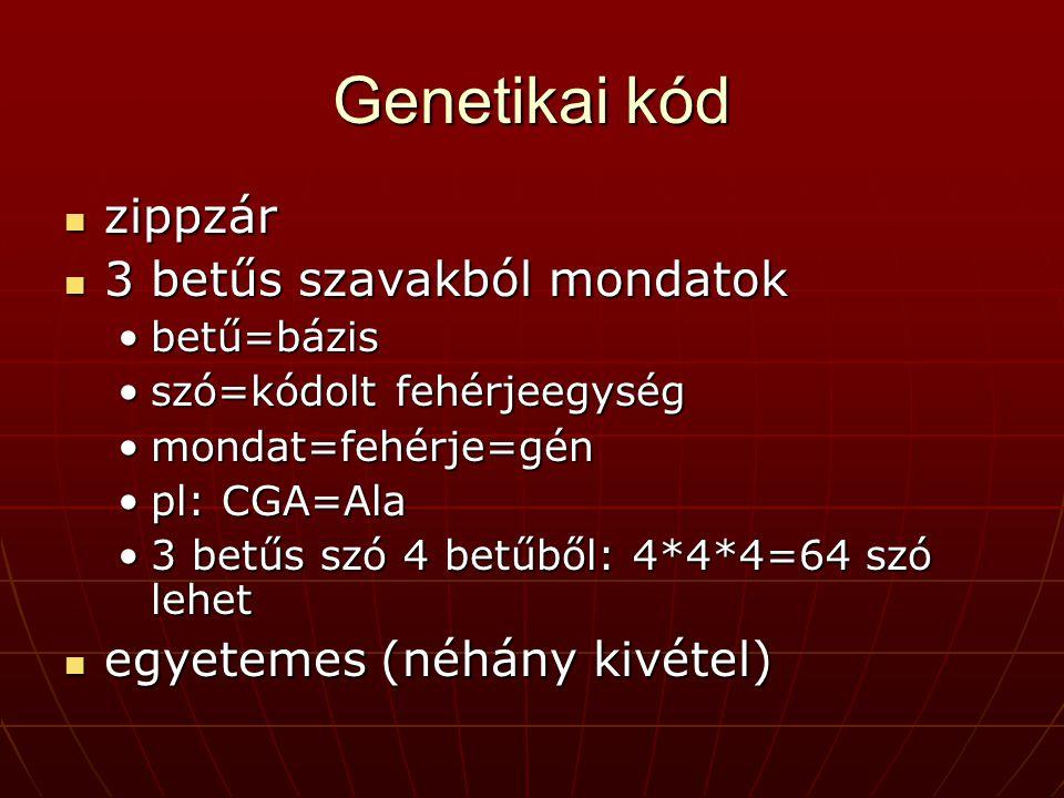 Genetikai kód zippzár 3 betűs szavakból mondatok