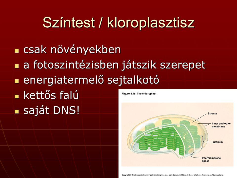 Színtest / kloroplasztisz