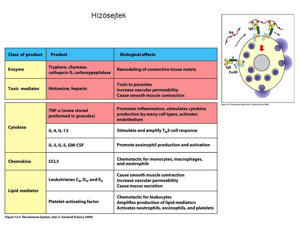 Hízósejtek