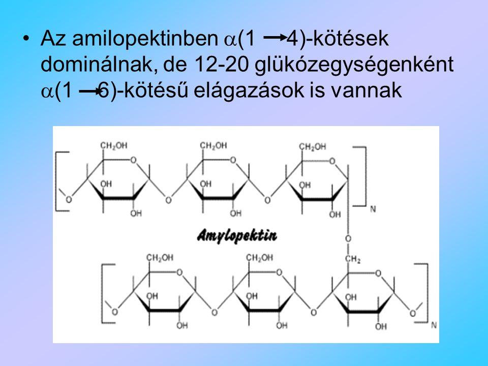 Az amilopektinben (1 4)-kötések dominálnak, de 12-20 glükózegységenként (1 6)-kötésű elágazások is vannak