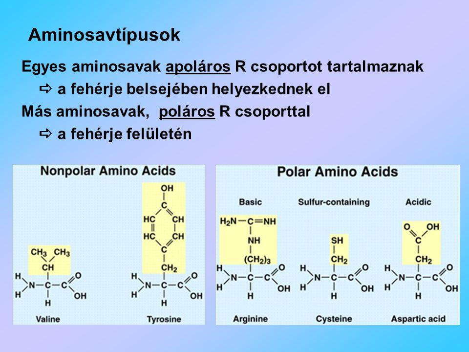 Aminosavtípusok Egyes aminosavak apoláros R csoportot tartalmaznak