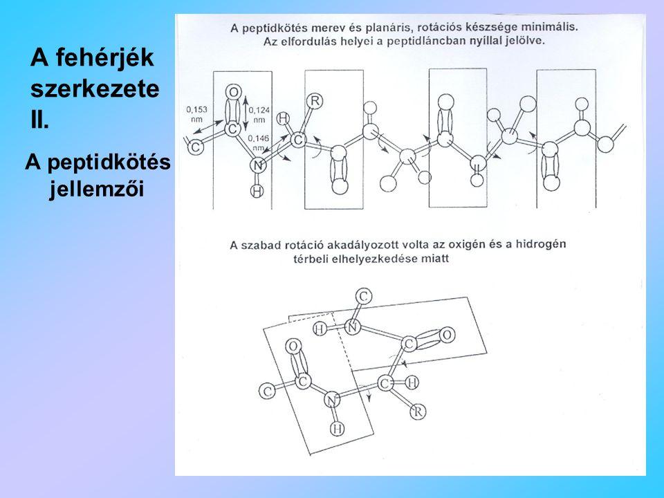 A fehérjék szerkezete II.