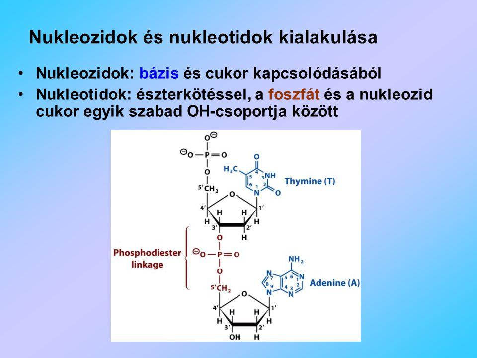 Nukleozidok és nukleotidok kialakulása