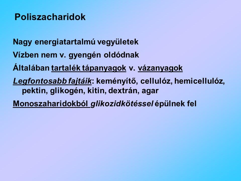 Poliszacharidok Nagy energiatartalmú vegyületek