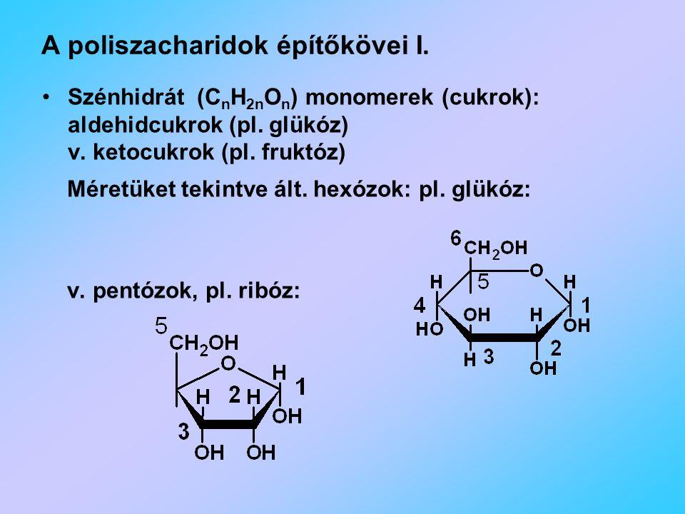 A poliszacharidok építőkövei I.