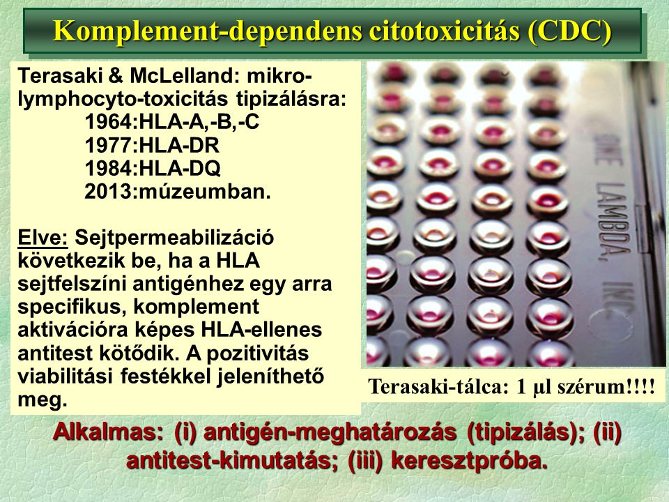 Komplement-dependens citotoxicitás (CDC)