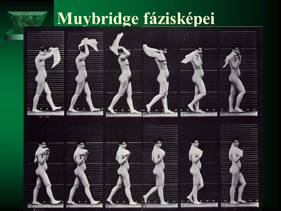 Muybridge fázisképei