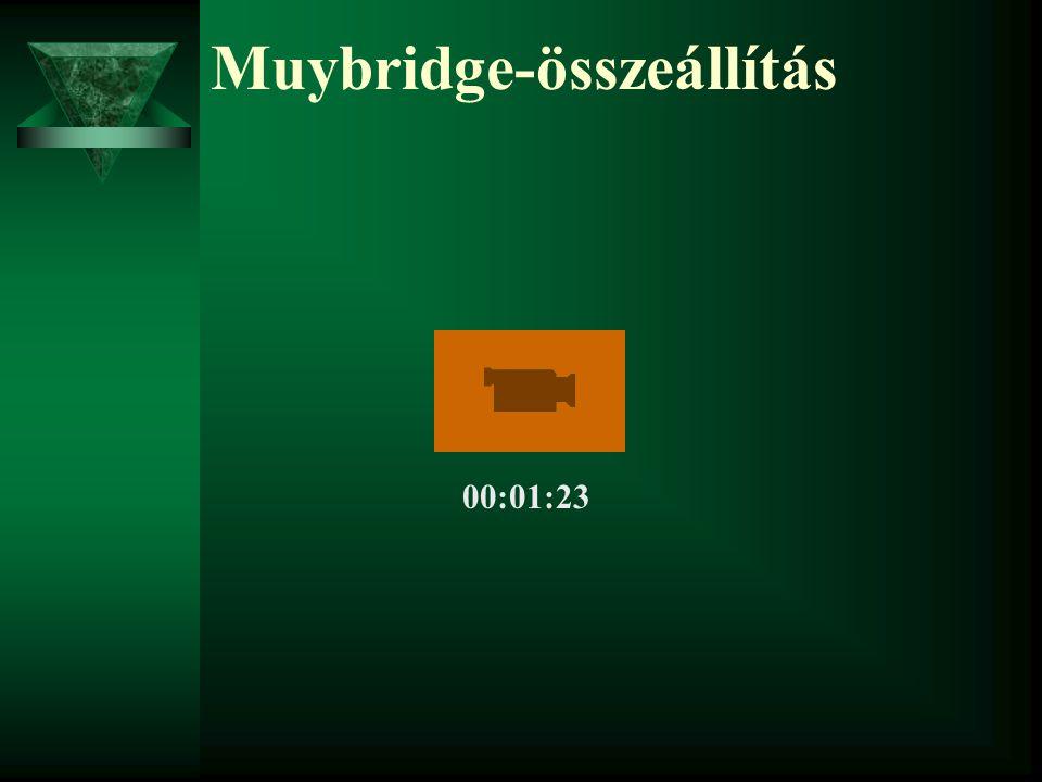 Muybridge-összeállítás