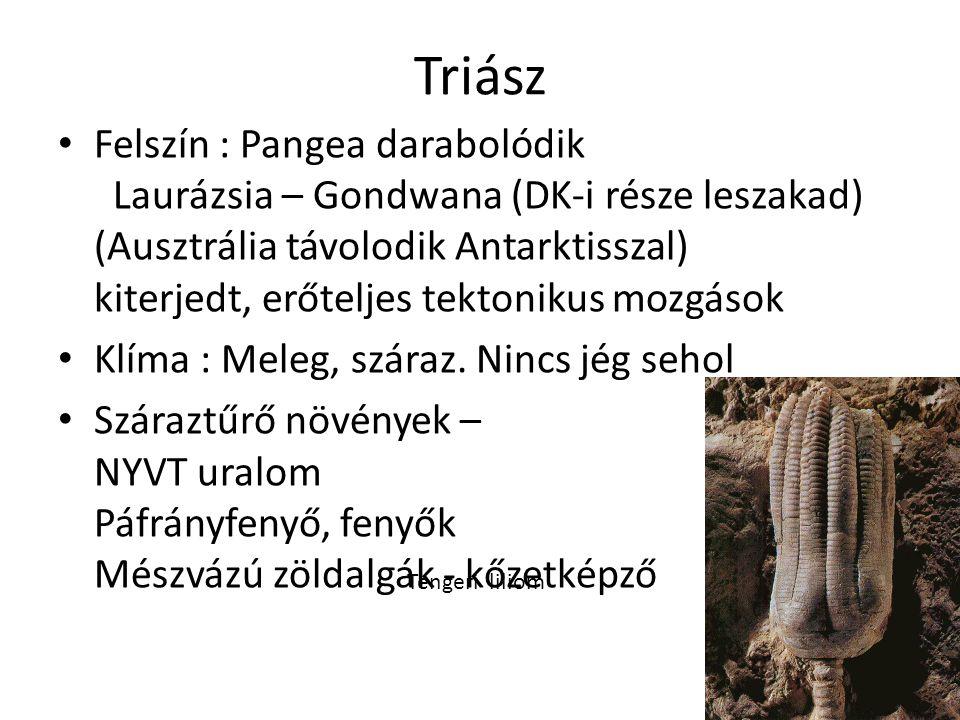 Triász