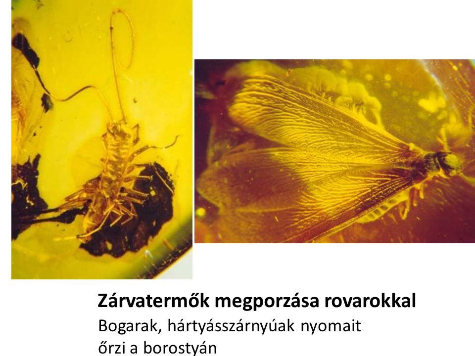 Zárvatermők megporzása rovarokkal