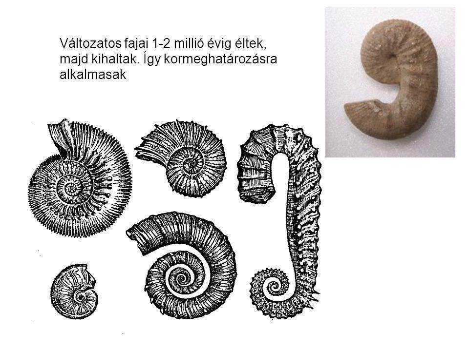 Változatos fajai 1-2 millió évig éltek, majd kihaltak