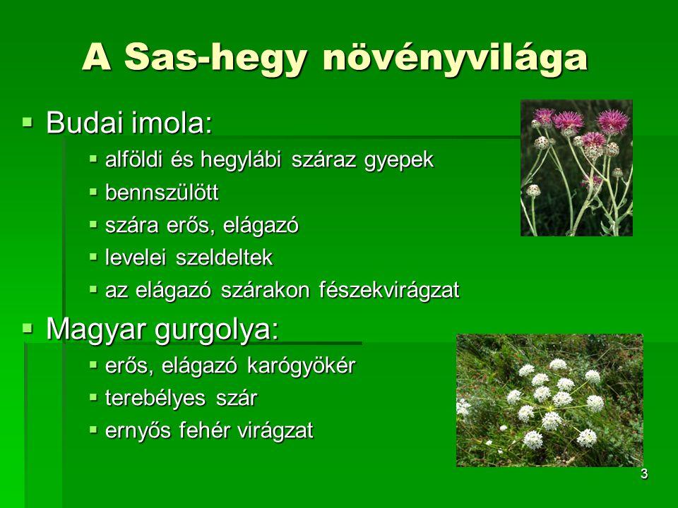 A Sas-hegy növényvilága