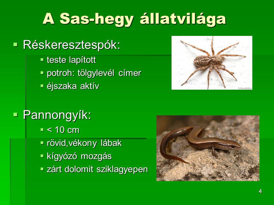A Sas-hegy állatvilága
