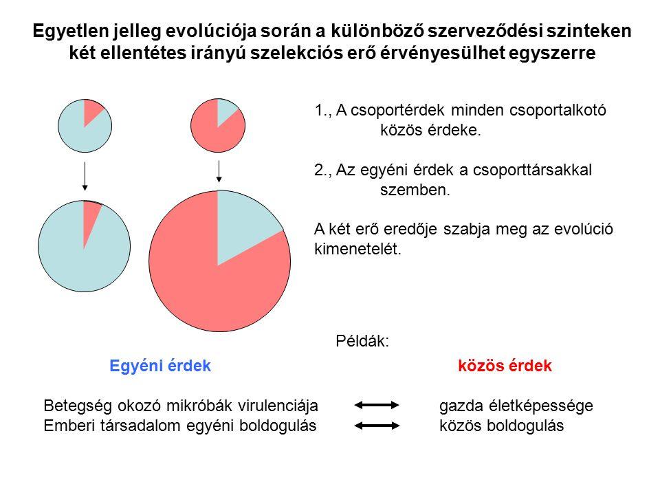 Egyetlen jelleg evolúciója során a különböző szerveződési szinteken