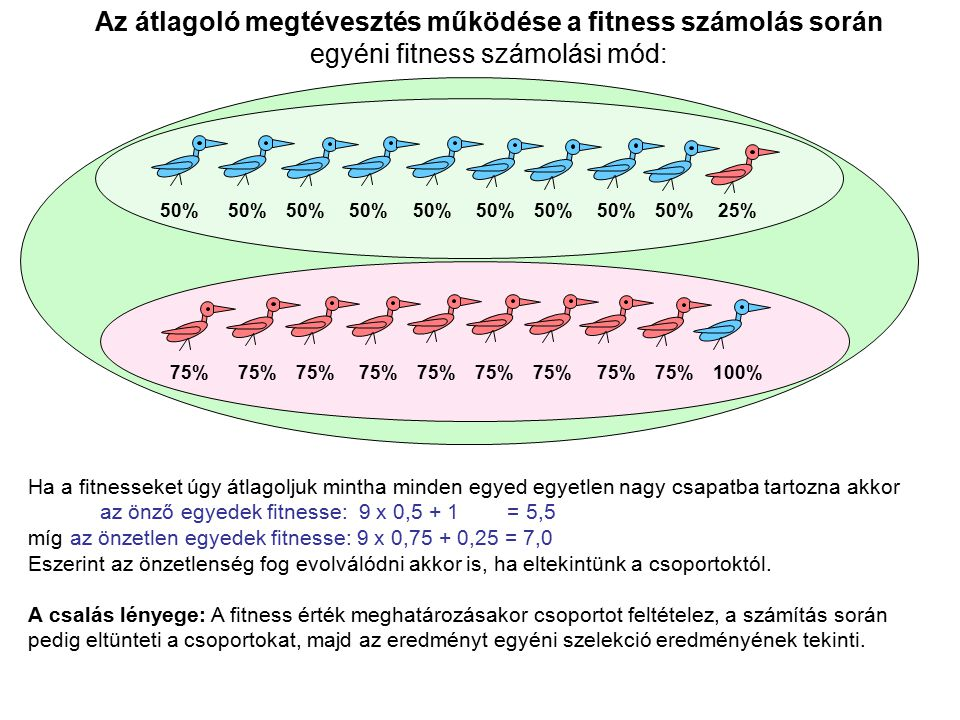 Az átlagoló megtévesztés működése a fitness számolás során