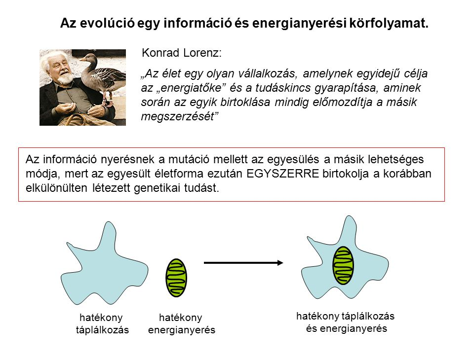 Az evolúció egy információ és energianyerési körfolyamat.