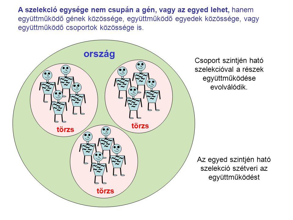 Az egyed szintjén ható szelekció szétveri az együttműködést