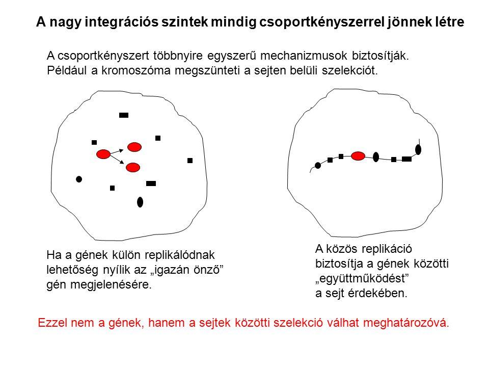 A nagy integrációs szintek mindig csoportkényszerrel jönnek létre
