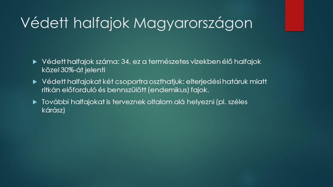 Védett halfajok Magyarországon
