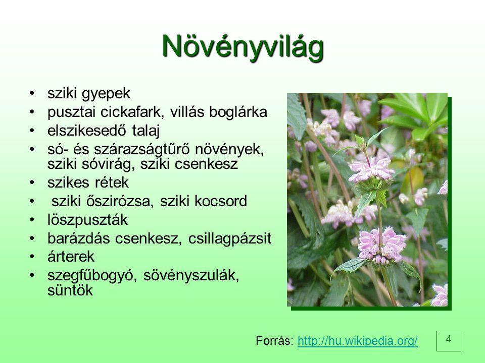 Növényvilág sziki gyepek pusztai cickafark, villás boglárka