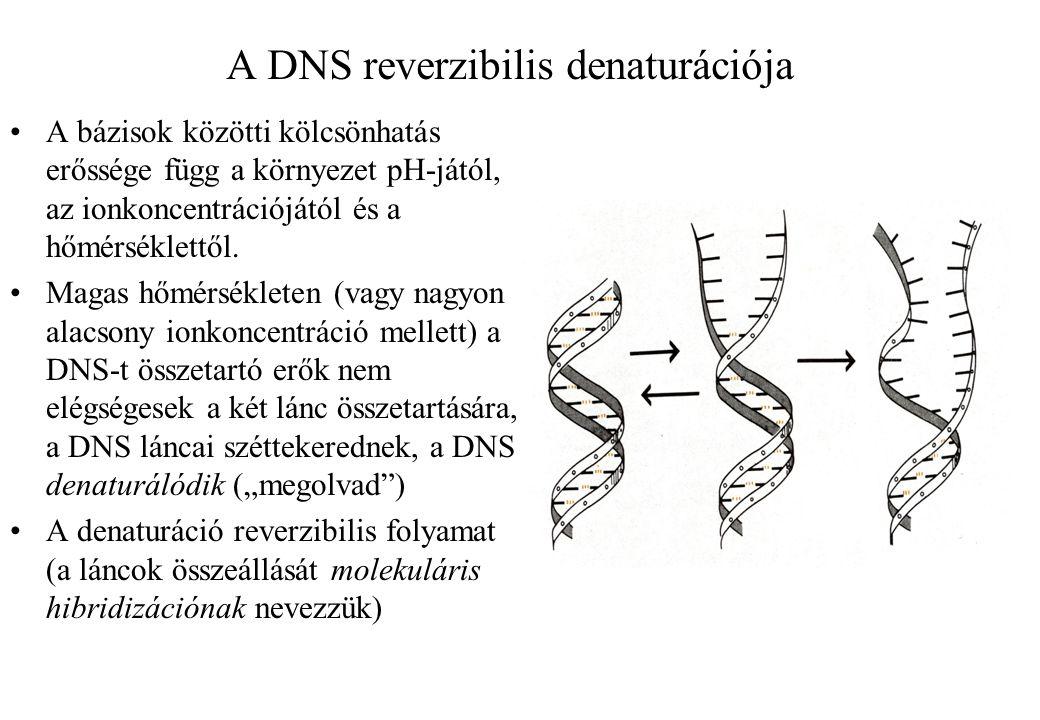 A DNS reverzibilis denaturációja