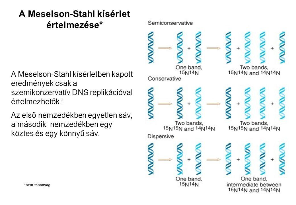 A Meselson-Stahl kísérlet értelmezése*