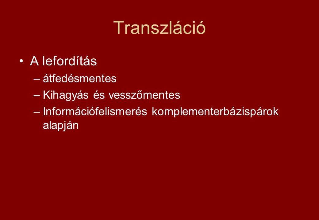 Transzláció A lefordítás átfedésmentes Kihagyás és vesszőmentes
