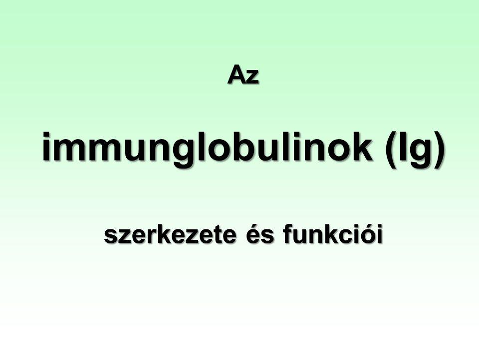 Az immunglobulinok (Ig) szerkezete és funkciói