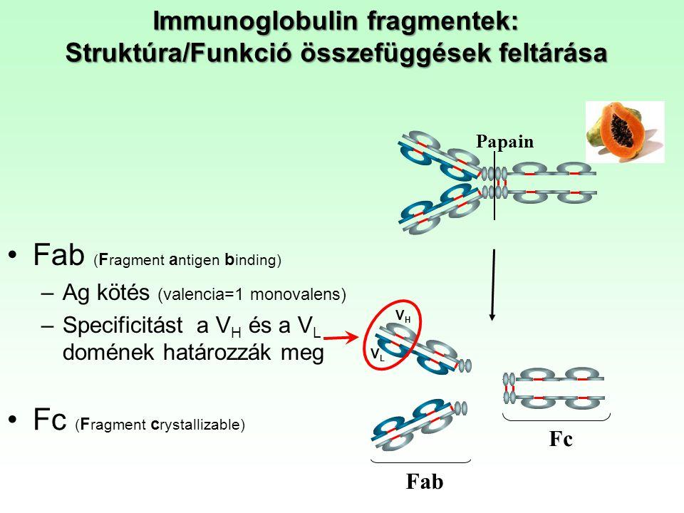 Immunoglobulin fragmentek: Struktúra/Funkció összefüggések feltárása