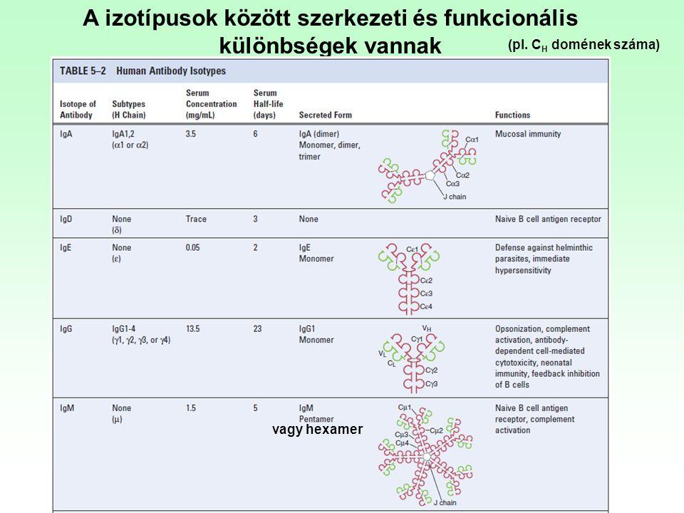 A izotípusok között szerkezeti és funkcionális különbségek vannak