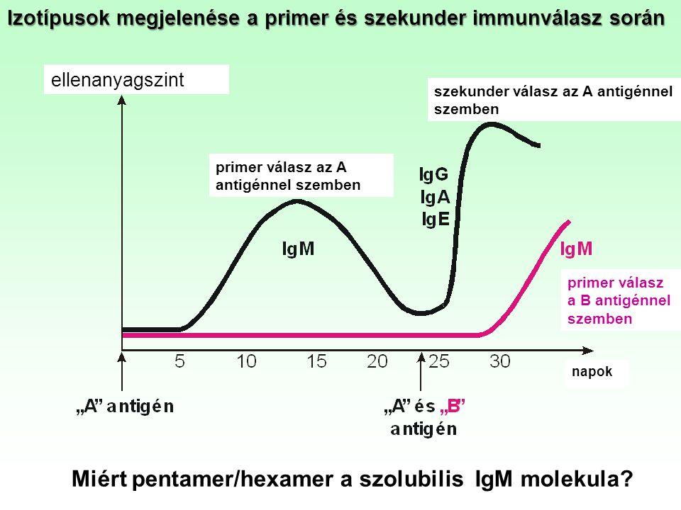 Miért pentamer/hexamer a szolubilis IgM molekula
