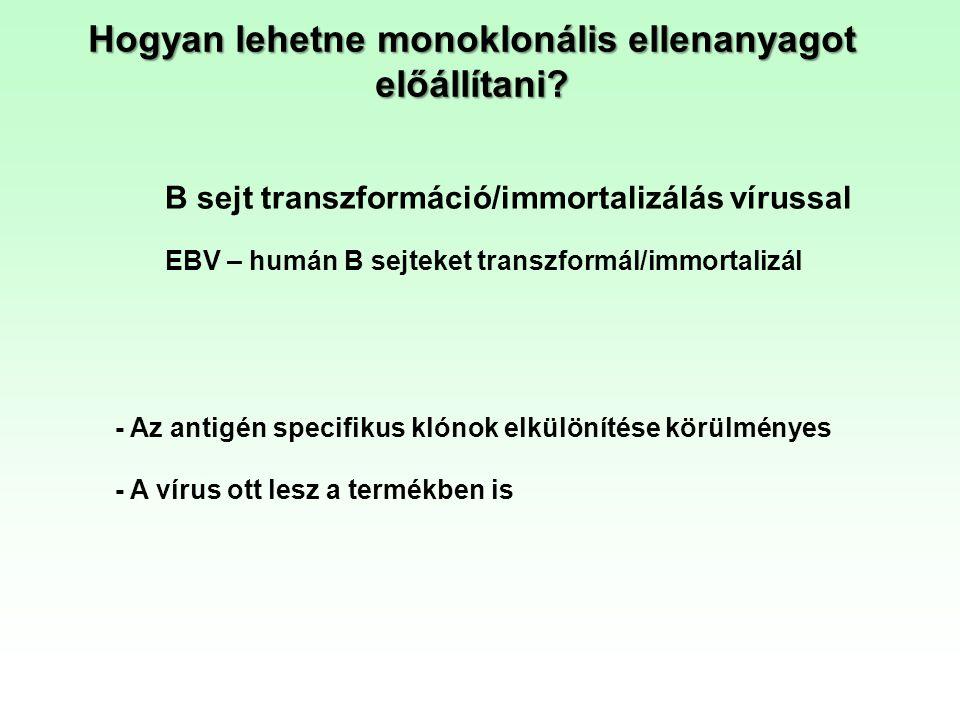 Hogyan lehetne monoklonális ellenanyagot előállítani
