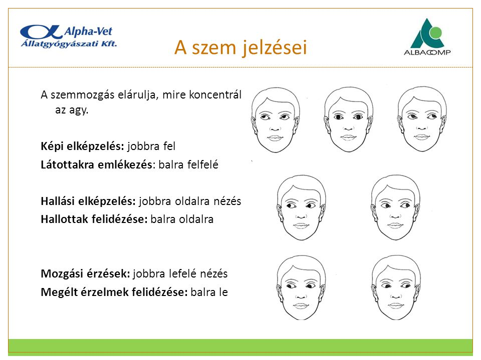 A szem jelzései A szemmozgás elárulja, mire koncentrál az agy.