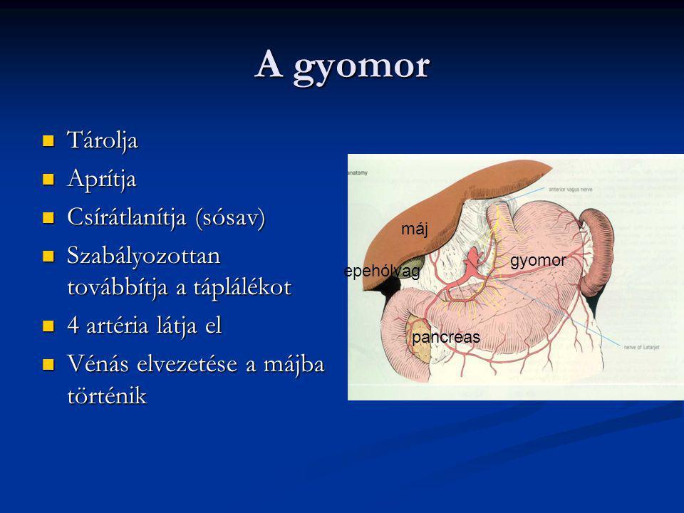 A gyomor Tárolja Aprítja Csírátlanítja (sósav)