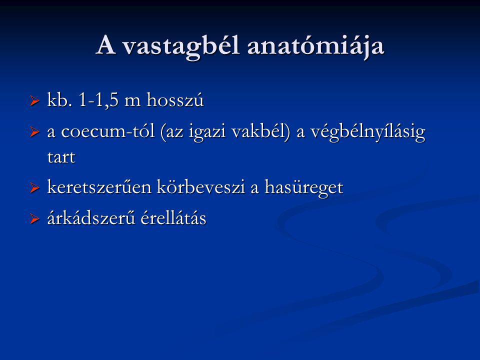 A vastagbél anatómiája