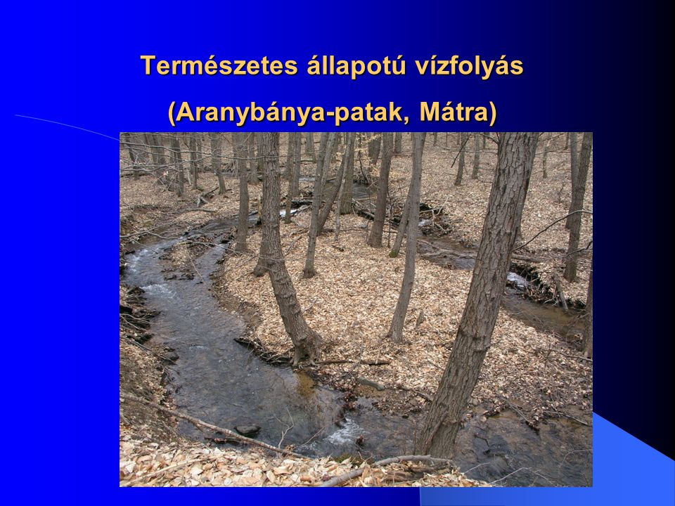 Természetes állapotú vízfolyás (Aranybánya-patak, Mátra)
