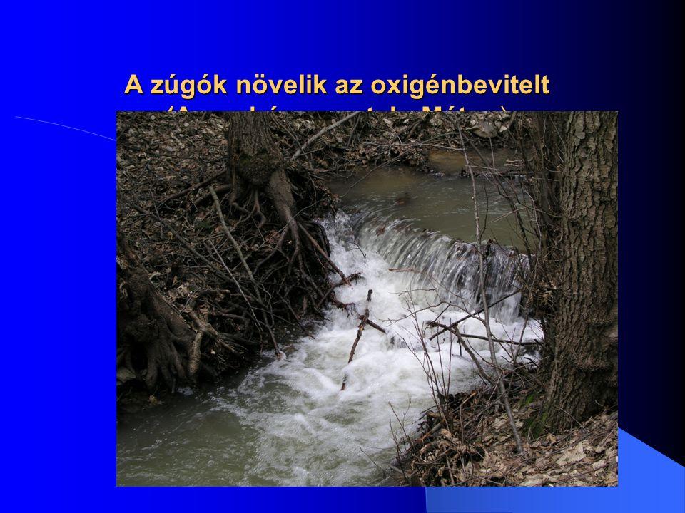 A zúgók növelik az oxigénbevitelt (Aranybánya-patak, Mátra )