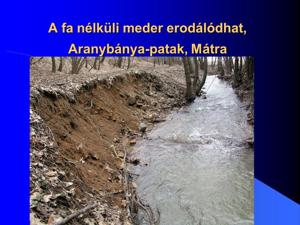 A fa nélküli meder erodálódhat, Aranybánya-patak, Mátra