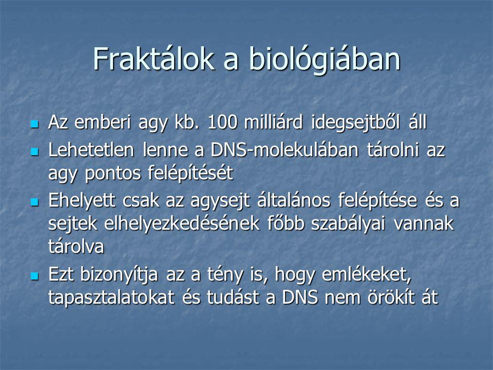 Fraktálok a biológiában