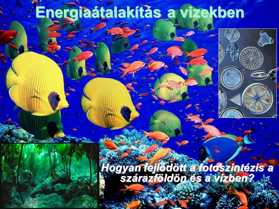 Energiaátalakítás a vizekben