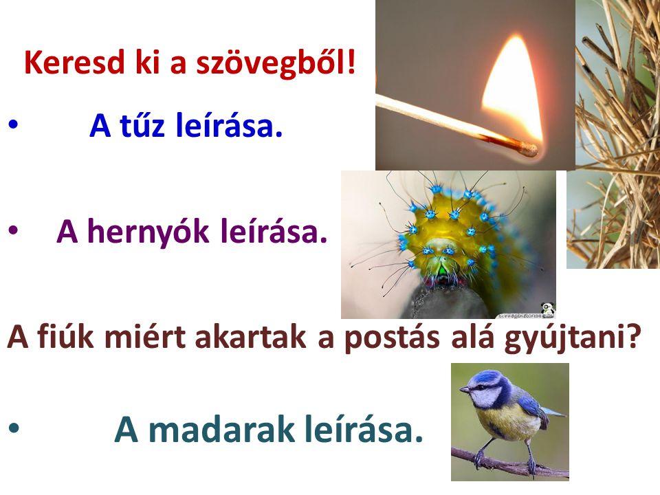 A madarak leírása. Keresd ki a szövegből! A tűz leírása.