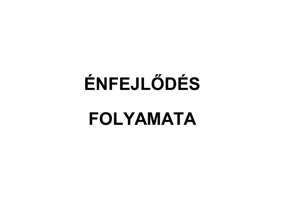 ÉNFEJLŐDÉS FOLYAMATA